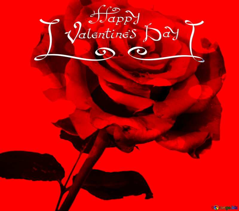 happy valentines day red rose №17091