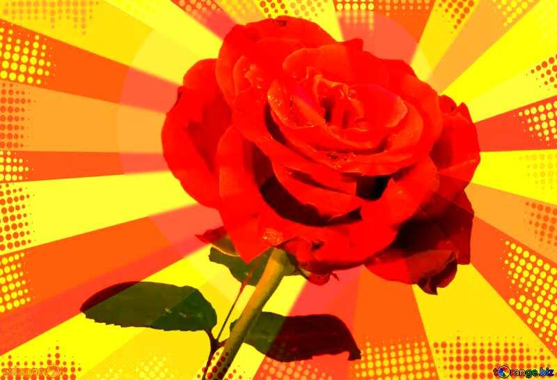 Rose background №17091