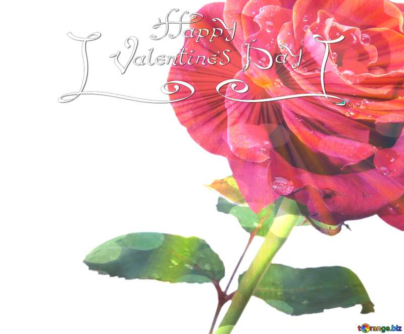 Rose background with drops sunlight rays happy valentines day №17091