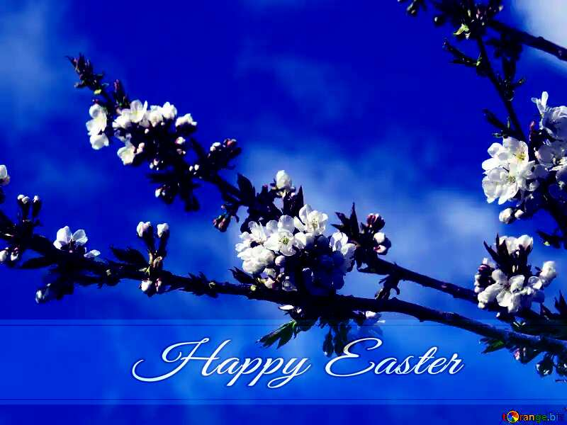 The arrival of spring Blue card with Inscription Happy Easter №24414