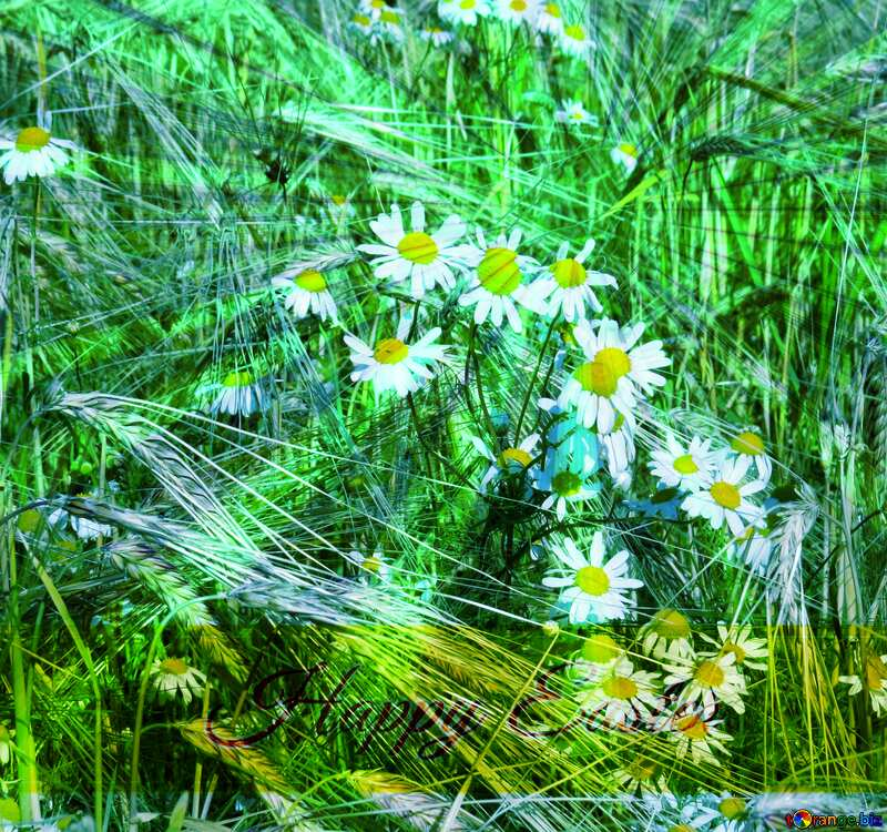 Chamomile flowers weeds Inscription Happy Easter on Background with Rays of sunlight №32522