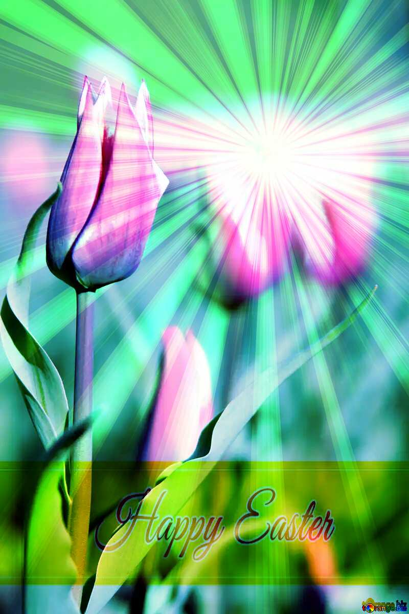 Pink flower of tulip Inscription Happy Easter on Background with Rays of sunlight №1660