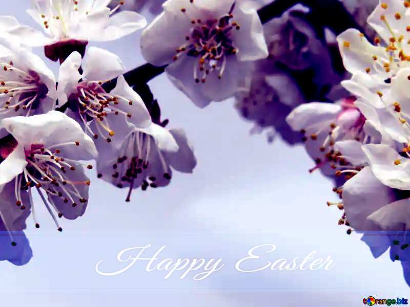 Spring flowers on the tree Blue card with Inscription Happy Easter №30025