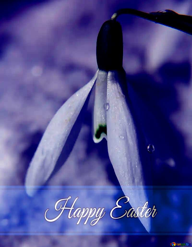 Spring on white background card with Inscription Happy Easter №38284