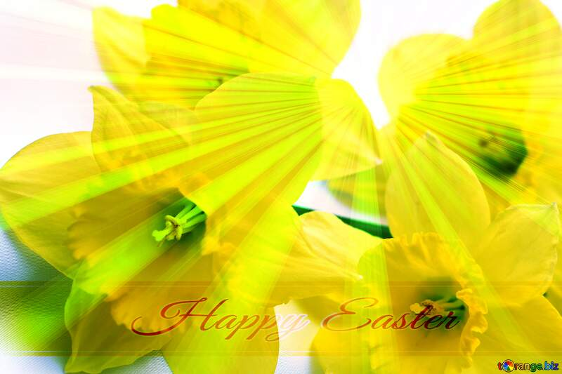 Yellow flowers Inscription Happy Easter on Background with Rays of sunlight №29991