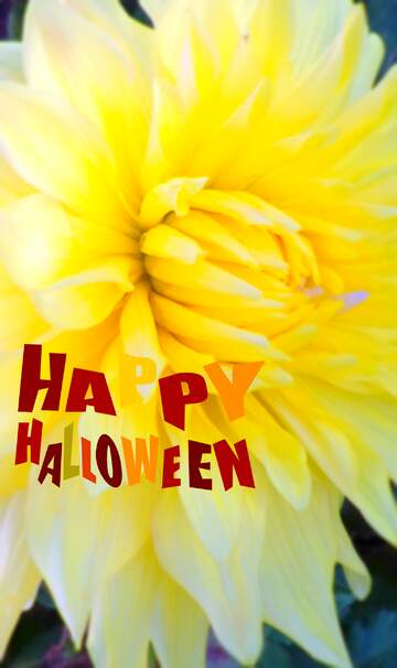 The effect of hard light. Very Vivid Colours. Blur frame. Fragment. Happy halloween.