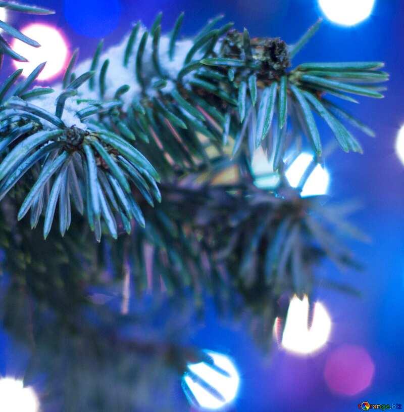Bild für Profilbild. Weihnachtsbaum. №15316