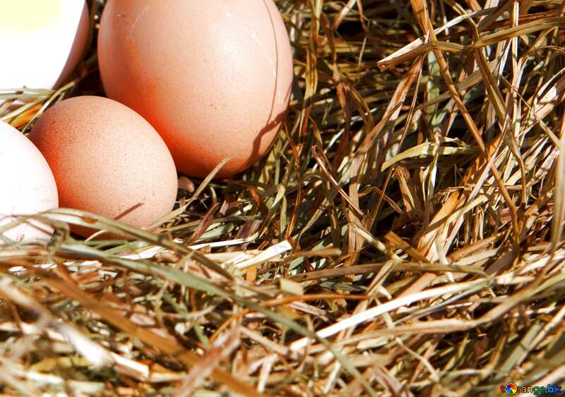 Blue color. Eggs in the nest. №1069