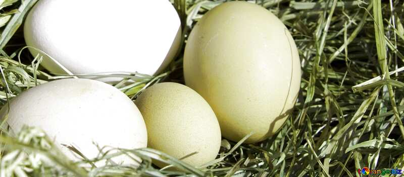 Cover. Eggs in the nest. №1069
