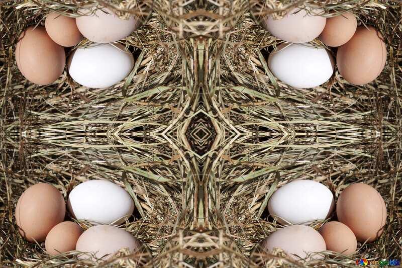 Frame Eggs in the nest №1069