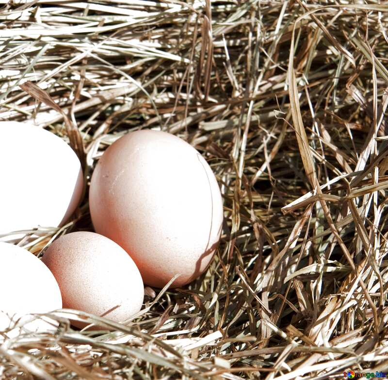 Image for profile picture Eggs in the nest. №1069