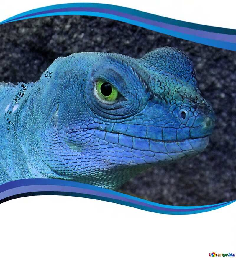 Lizard blue №10697