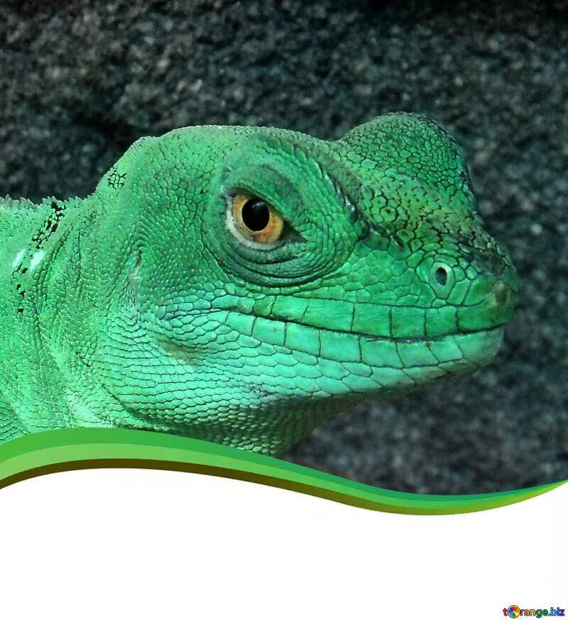 Lizard green №10697