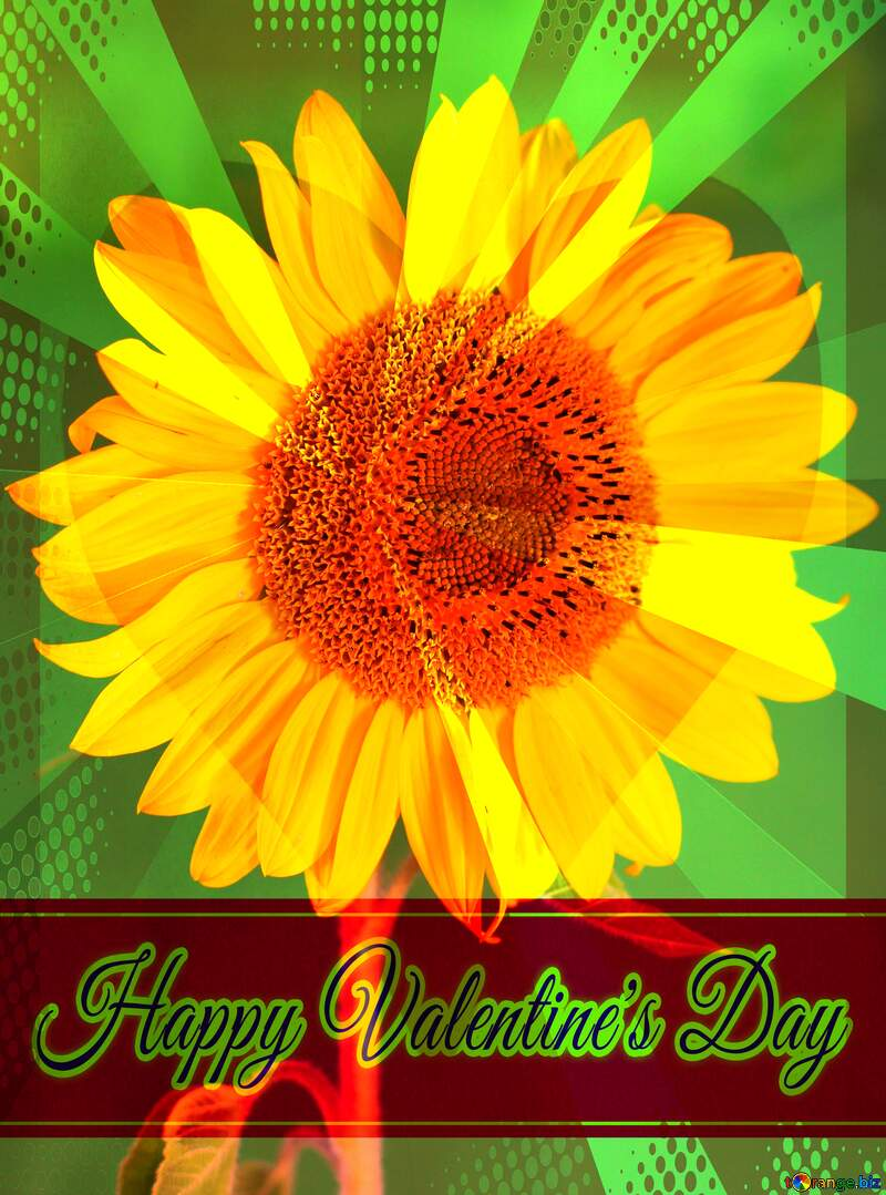 Sunflower on green background Greeting card retro style background Lettering Happy Valentine`s Day №32800
