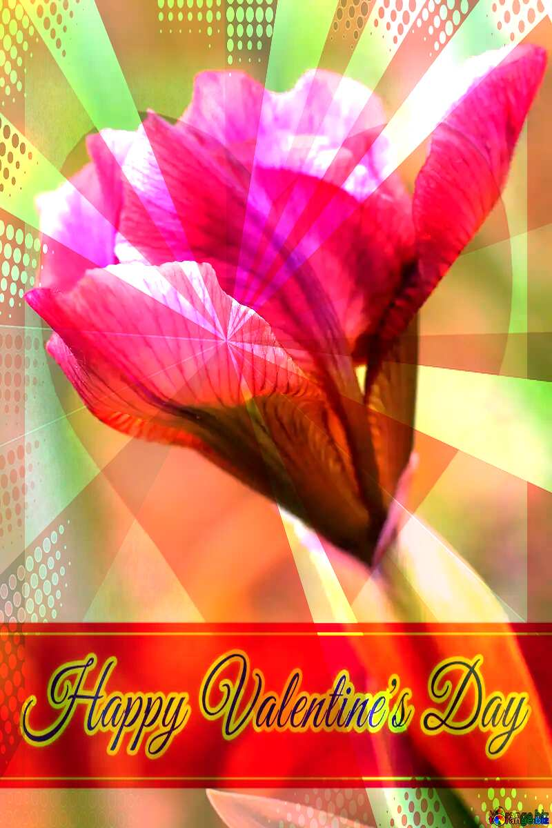 Iris flower bud Greeting card retro style background Lettering Happy Valentine`s Day №37687