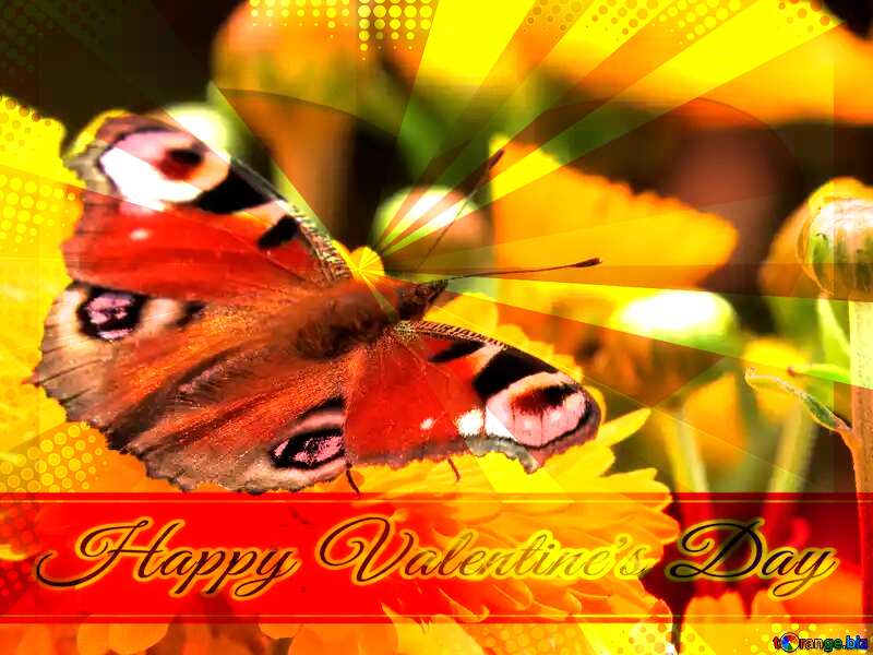 Wallpaper butterfly on flower Greeting card retro style background Lettering Happy Valentine`s Day №35841