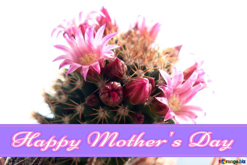 Blooming cactus isolated on white background Pretty Lettering Happy Mothers Day №46588