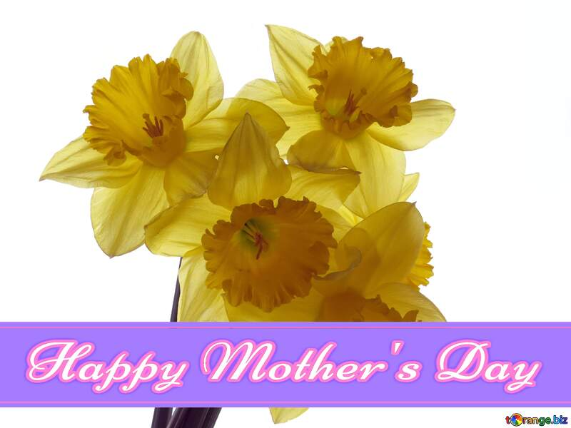 A bouquet of daffodils Pretty Lettering Happy Mothers Day №30946
