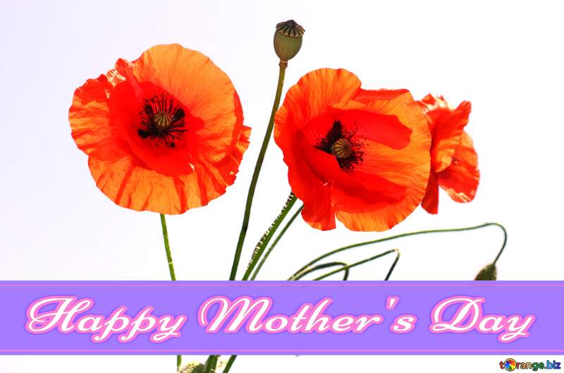 Bouquet of poppies in isolation Pretty Lettering Happy Mothers Day №37136