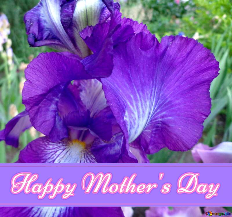 Bright iris flower Pretty Lettering Happy Mothers Day №43016