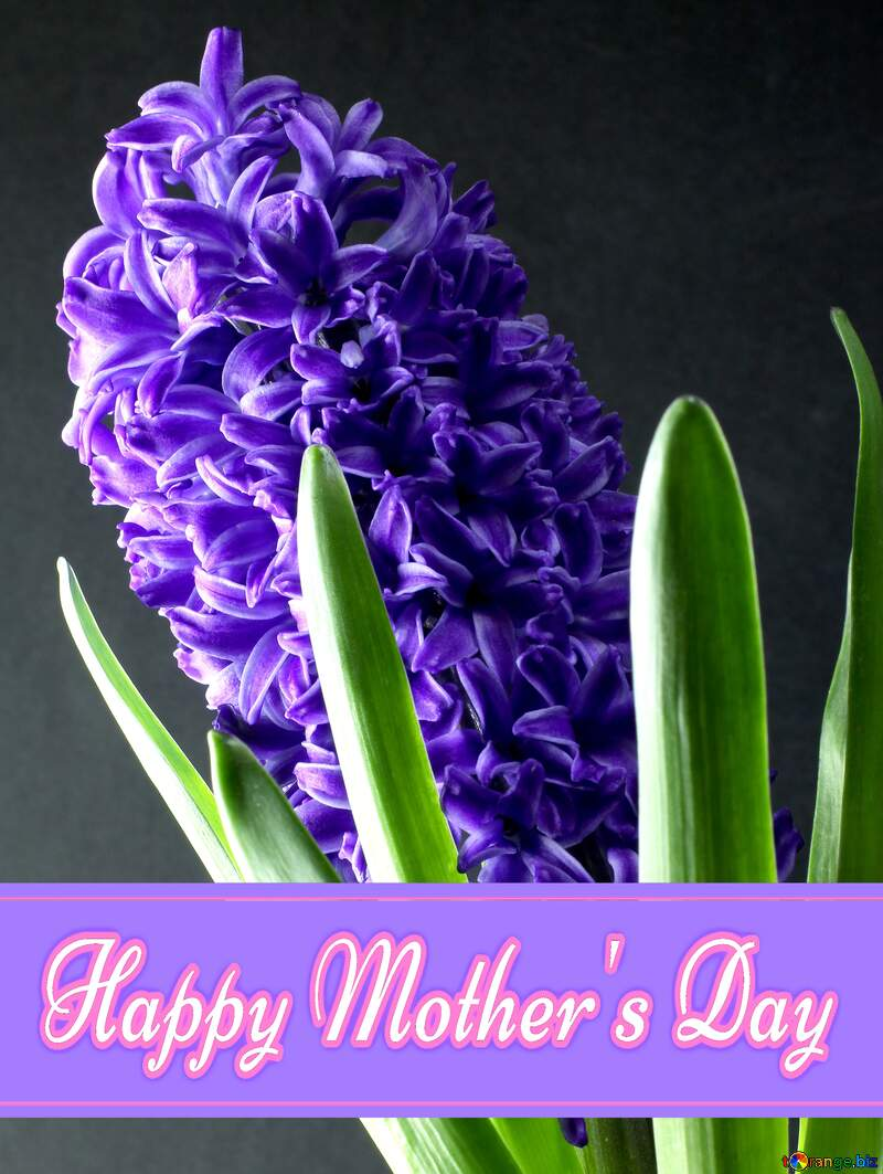 Flower hyacinths Pretty Lettering Happy Mothers Day №43061