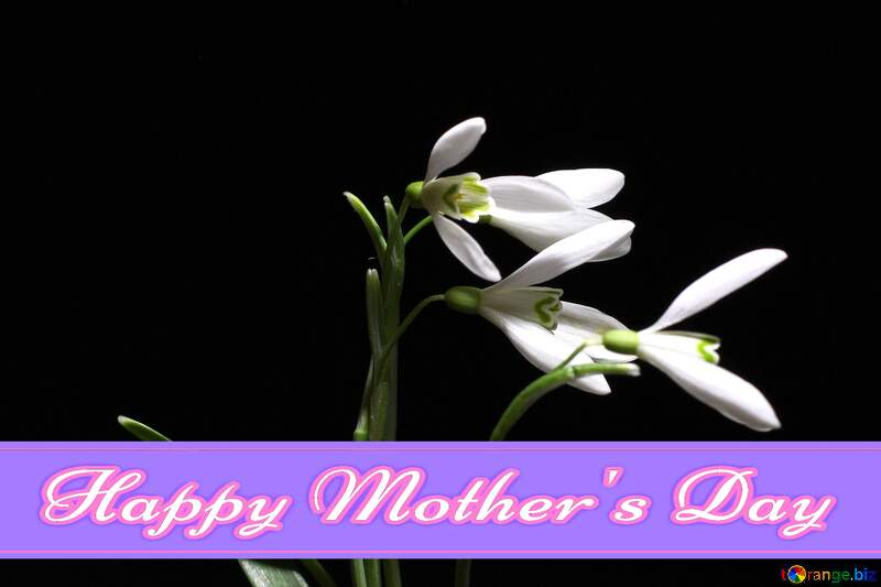 Flowers on the background Pretty Lettering Happy Mothers Day №38411
