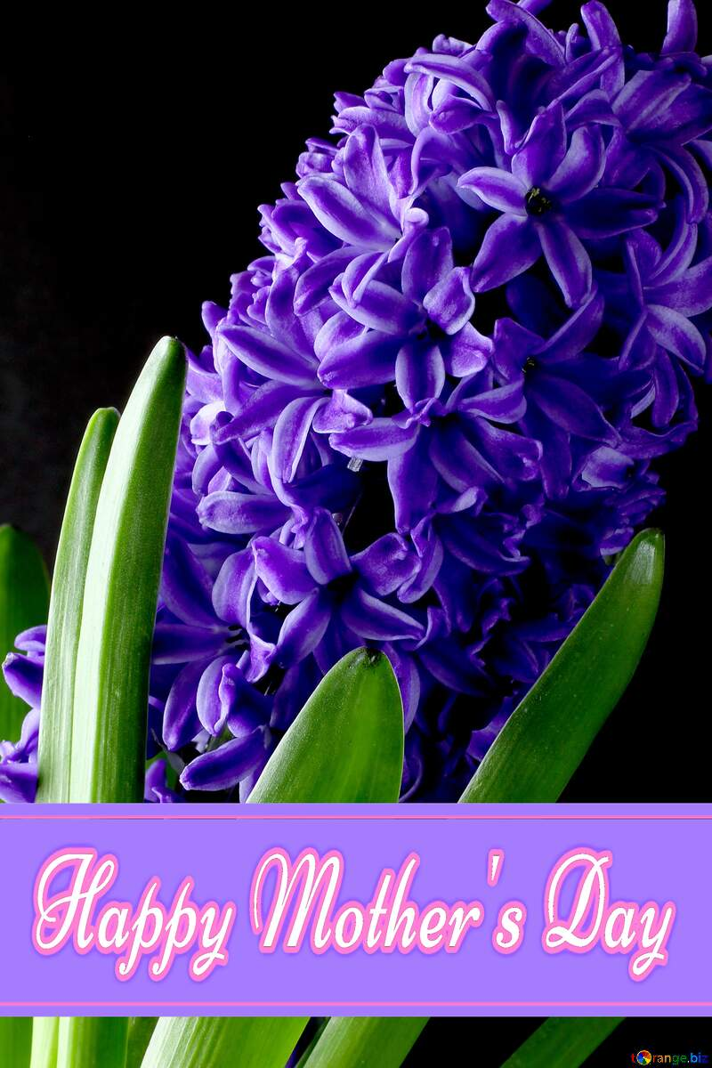Flowers hyacinths Pretty Lettering Happy Mothers Day №43062