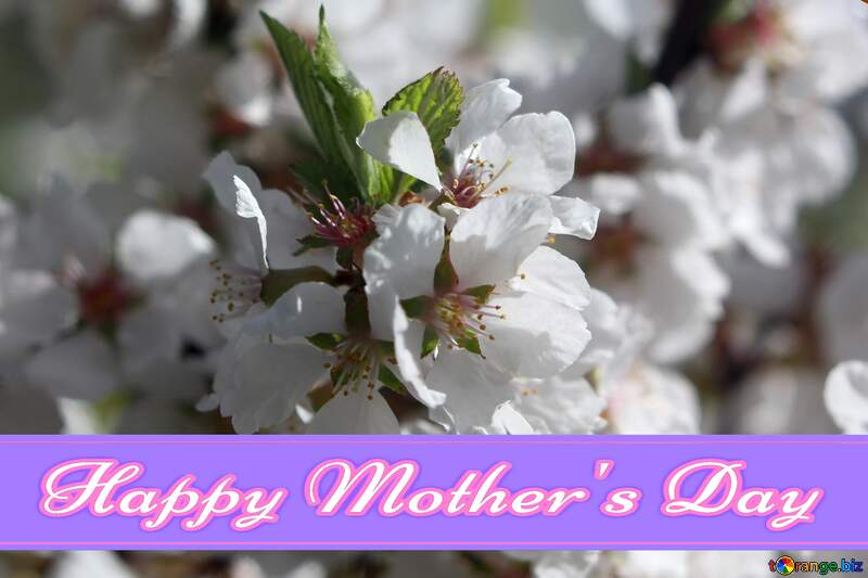 Large flowers of fruit tree Pretty Lettering Happy Mothers Day №39772