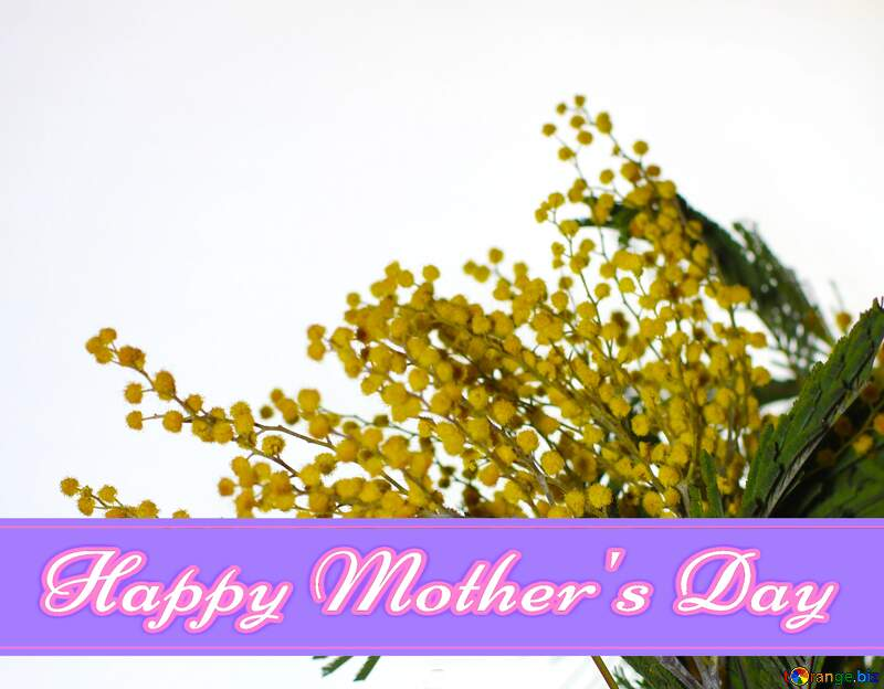Mimosa flowers background Pretty Lettering Happy Mothers Day card №41372