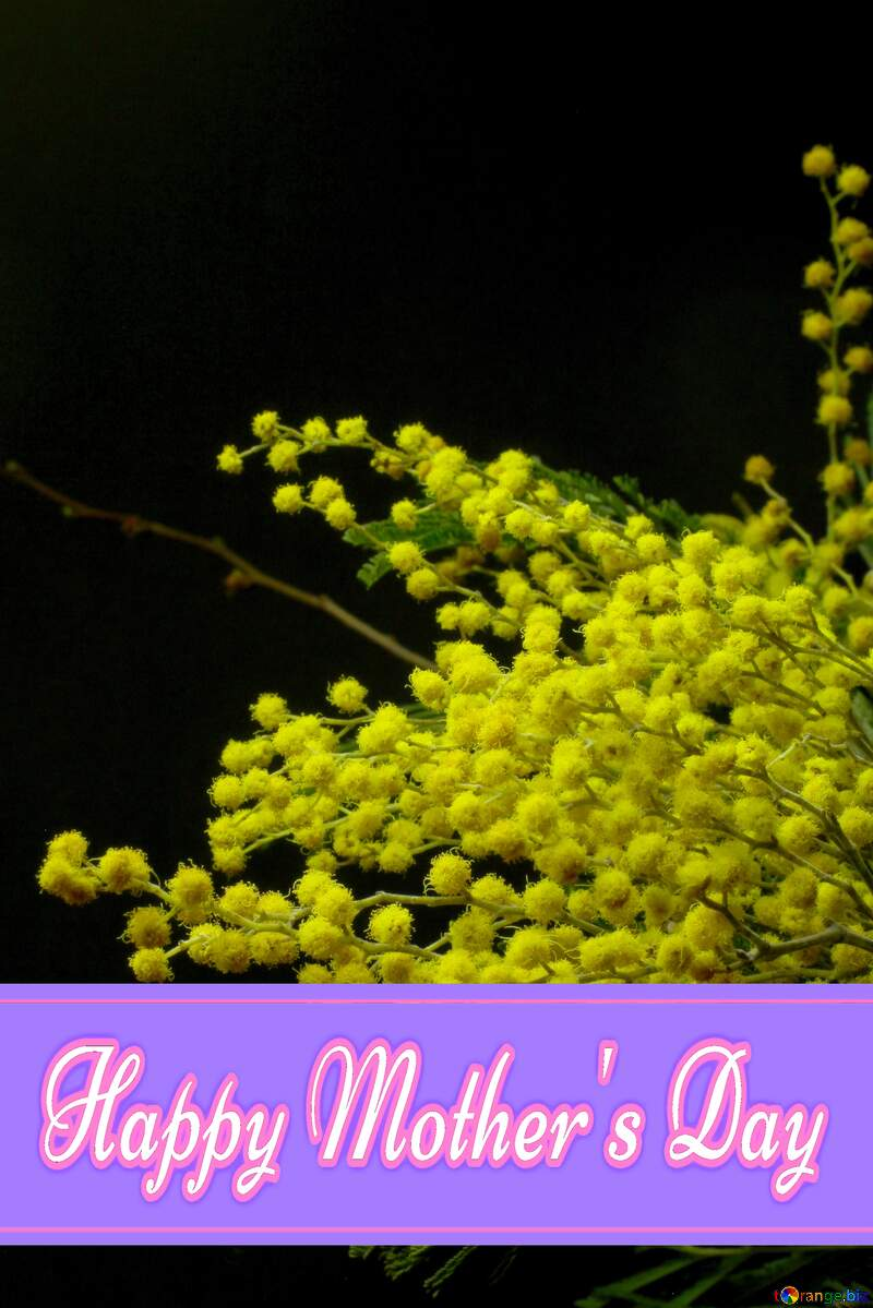 Mimosa flowers isolated on a black background Pretty Lettering Happy Mothers Day №46286