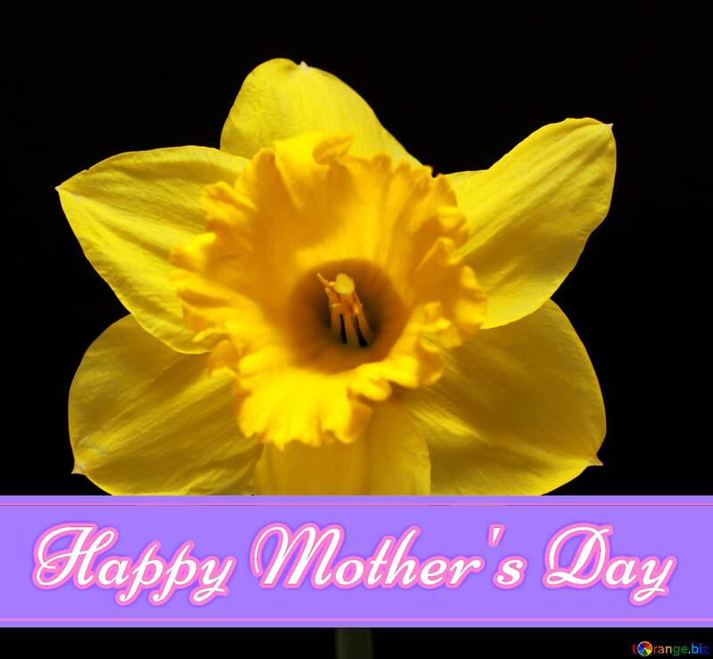 Narcissus flower Pretty Lettering Happy Mothers Day №30906