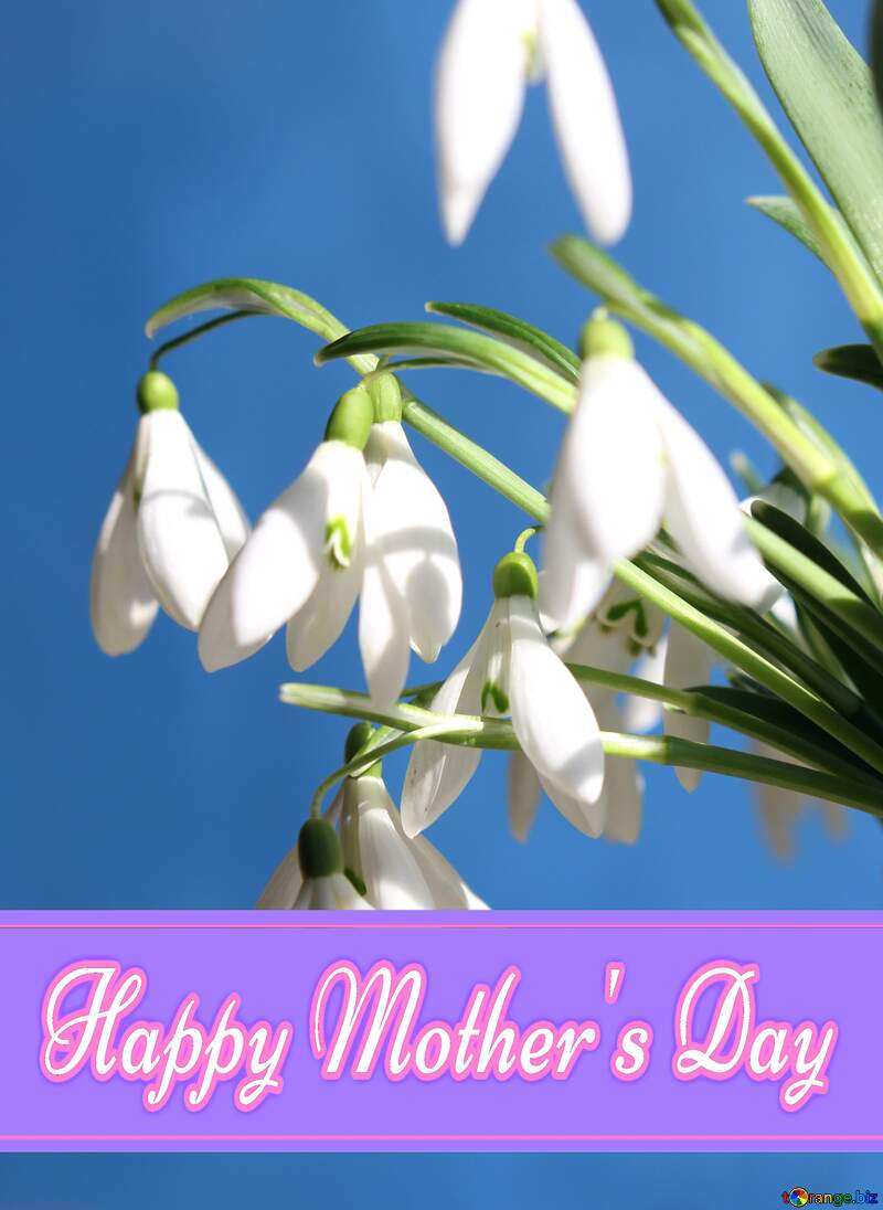 Postcards of flowers Pretty Lettering Happy Mothers Day №38346
