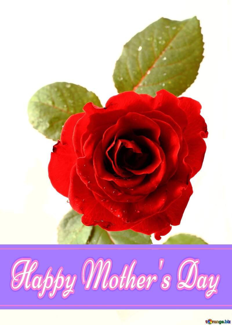Rose  Pretty Lettering Happy Mothers Day №17030