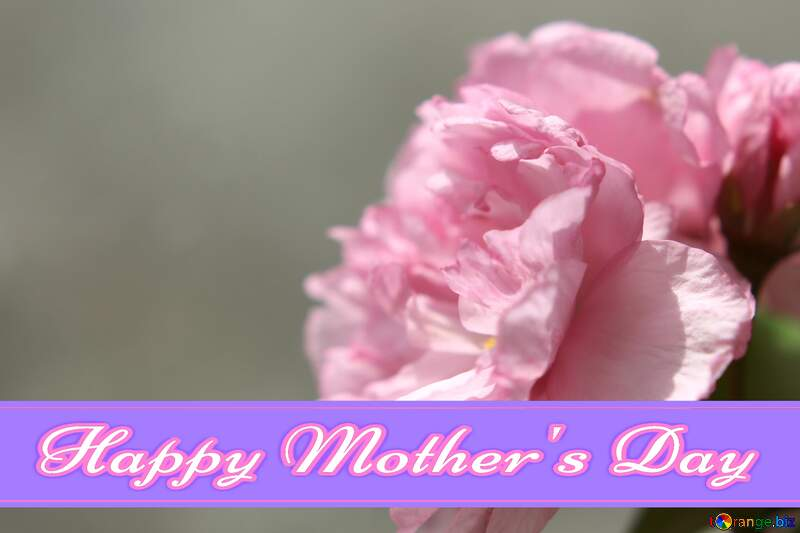 Sakura flower Pretty Lettering Happy Mothers Day №48600