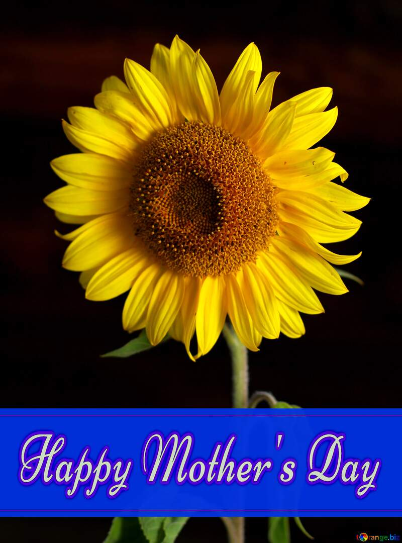 Sunflower flower Pretty Lettering Happy Mothers Day №32798