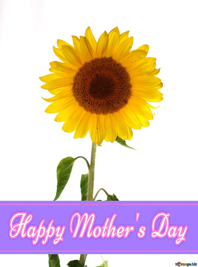 Sunflower flower Pretty Lettering Happy Mothers Day №32794