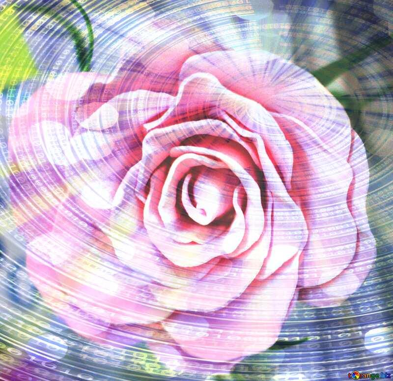 Rose flower Digital Binary data  bokeh background №48638