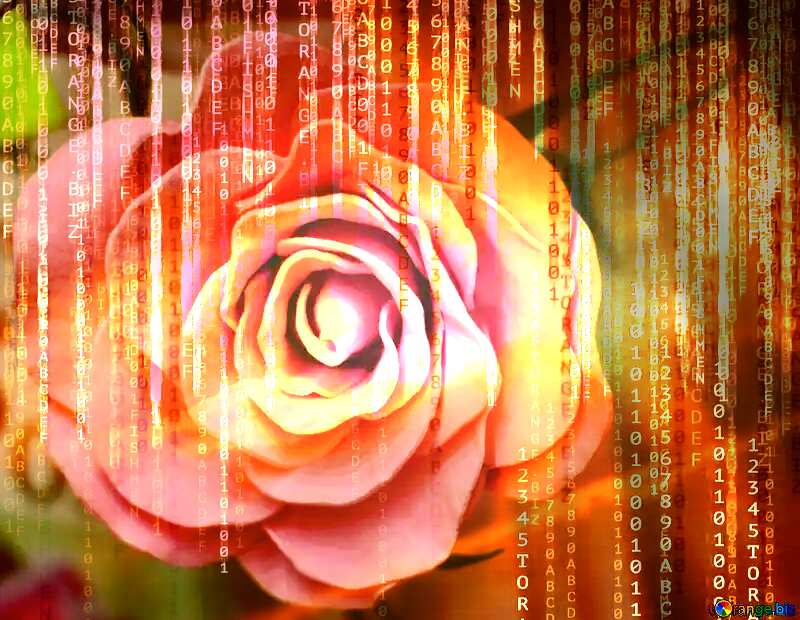 Rose flower from foamirana Red Digital technology background with binary code №48638