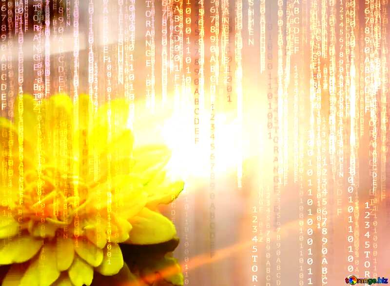 Yellow flower of foamirana Red Digital technology background with binary code №48635