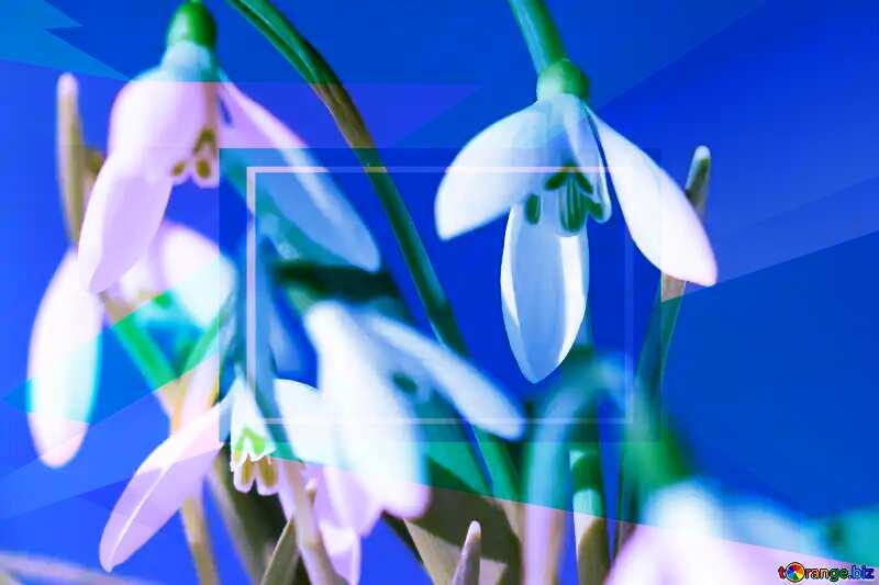 Flowers spring Blue blank illustration template geometric frame №38312
