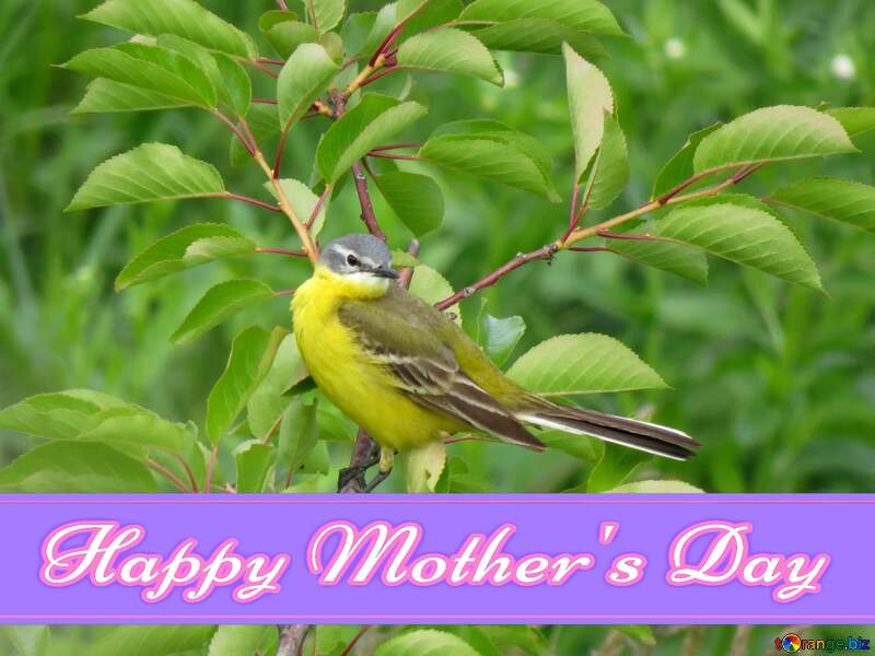 Happy mother`s day card with bird №28274