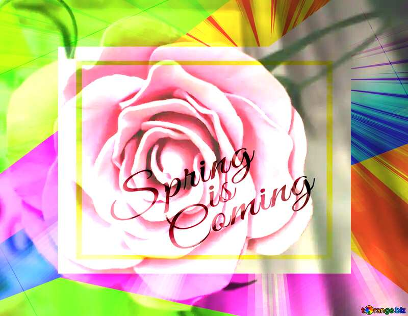 Rose flower from foamirana Colorful illustration template frame with Rays of sunlight and Lettering Spring is Coming №48638