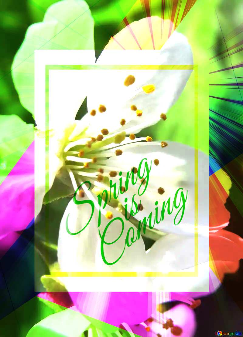 Spring flower Colorful illustration template frame with Rays of sunlight and Lettering Spring is Coming №24064