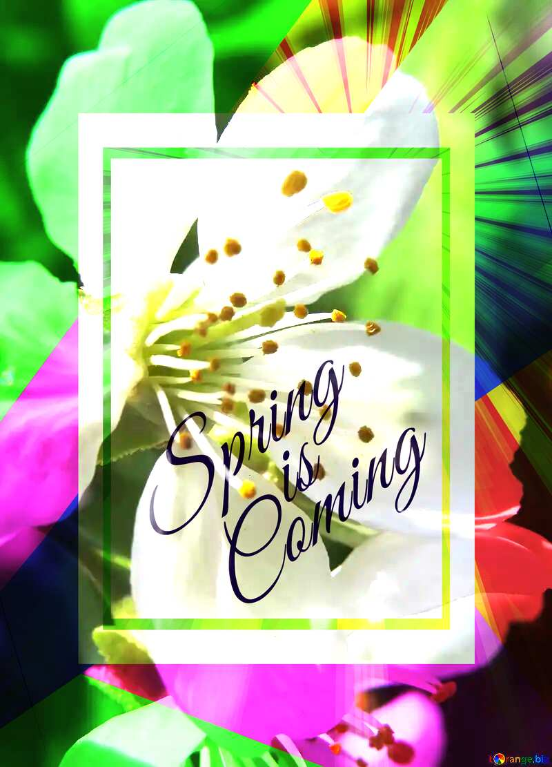 Spring flower template card frame with inscription Spring is Coming №24064