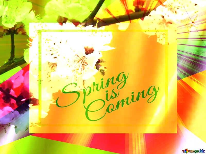 Spring flowering tree Colorful illustration template frame with Rays of sunlight and Lettering Spring is Coming №29950