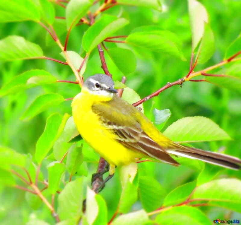 Songbird wing a small bird on a tree №28274