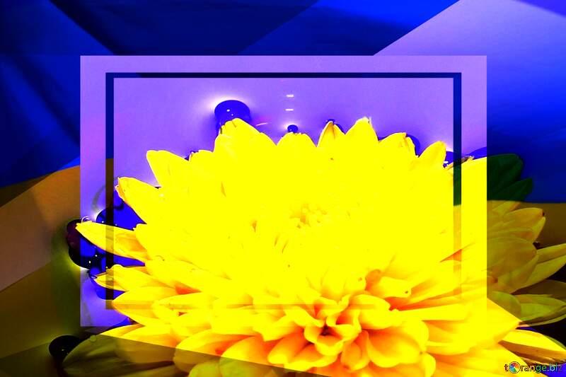 Ukrainian flower Ukrainian illustration template frame №37279