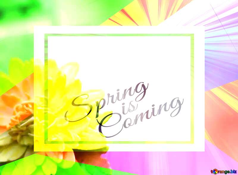 Yellow flower of foamirana template card frame with inscription Spring is Coming №48635
