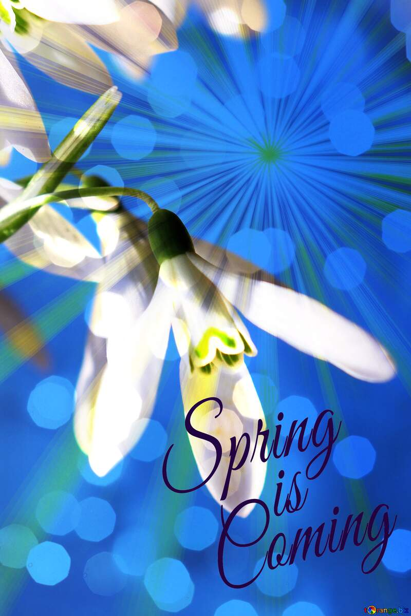 Background for flower cards Spring is coming №38343
