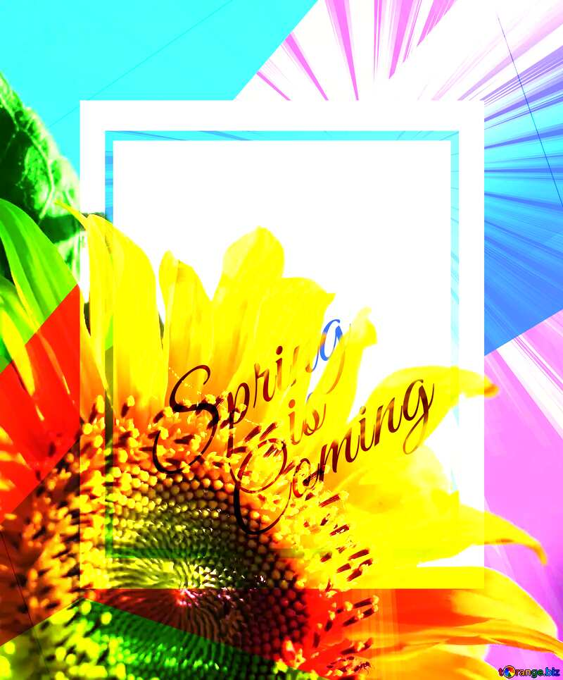 Congratulations to blue background with yellow flower template card frame with inscription Spring is Coming №32680
